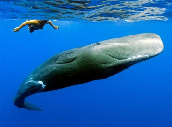 Foto ballena